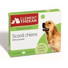 Scanil chien